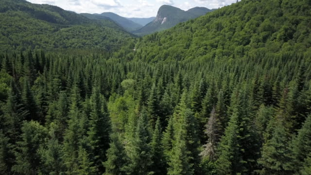 aerial view of boreal nature forest and mountain in summer - coniferous stock videos and b-roll footage