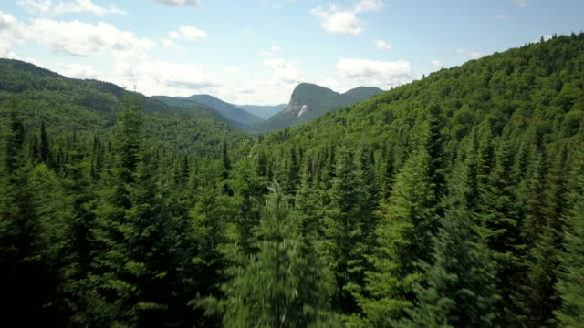 aerial view of boreal nature forest and mountain in summer - boreal forest stock videos & royalty-free footage