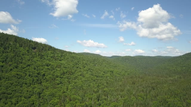 aerial view of boreal nature forest and mountain in summer - rolling landscape stock videos & royalty-free footage