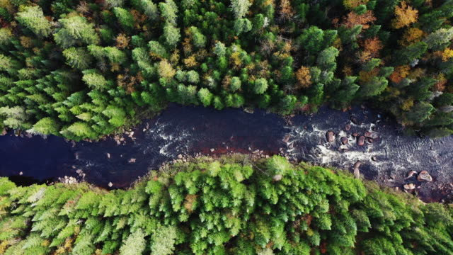 aerial view of boreal nature forest and river in autumn, quebec, canada - high up stock videos & royalty-free footage