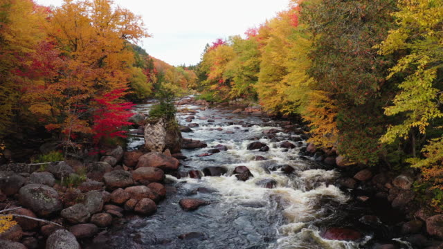 aerial view of boreal nature forest and river in autumn, quebec, canada - treetop stock videos & royalty-free footage