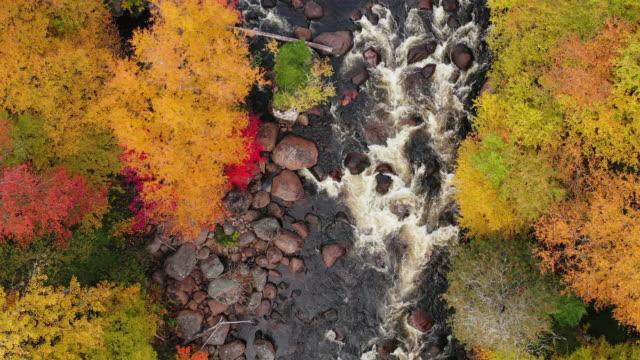 vídeos y material grabado en eventos de stock de vista aérea del bosque boreal de la naturaleza y el río en otoño, quebec, canadá - cima del árbol