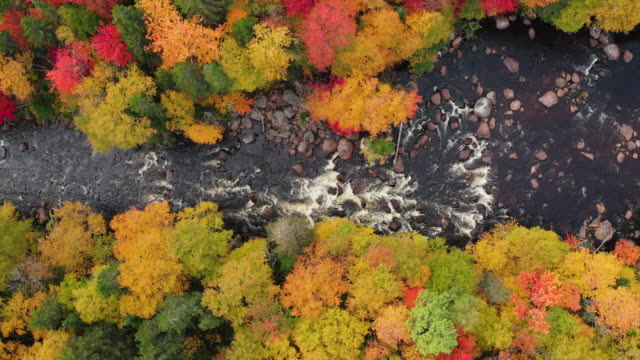 aerial view of boreal nature forest and river in autumn, quebec, canada - landscape stock videos & royalty-free footage