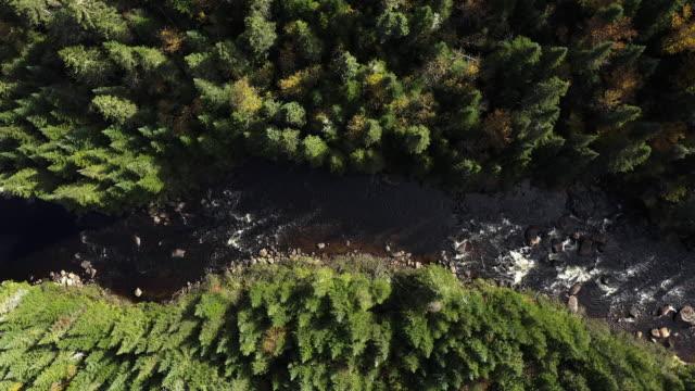 stockvideo's en b-roll-footage met luchtfoto van de boreale bossen van de natuur en rivier in de herfst, quebec, canada - stroomversnelling