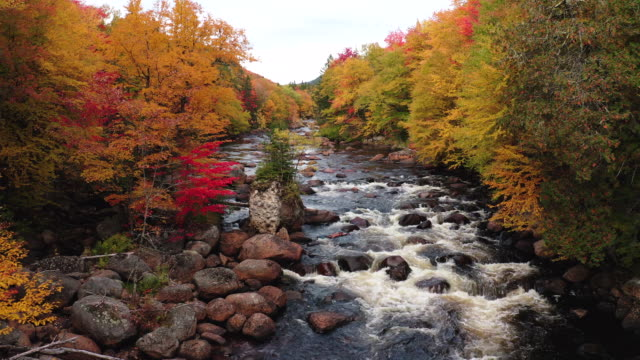 aerial view of boreal nature forest and river in autumn, quebec, canada - autumn stock videos & royalty-free footage