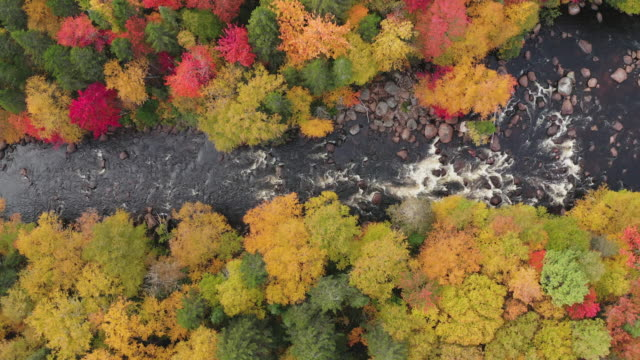 aerial view of boreal nature forest and river in autumn, quebec, canada - boreal forest stock videos & royalty-free footage