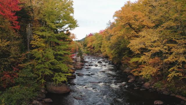 自然林と秋には、カナダ ケベック州の川の航空写真 - 梢点の映像素材/bロール