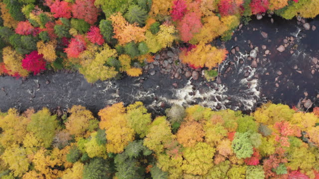 aerial view of boreal nature forest and river in autumn, quebec, canada - copertura di alberi video stock e b–roll