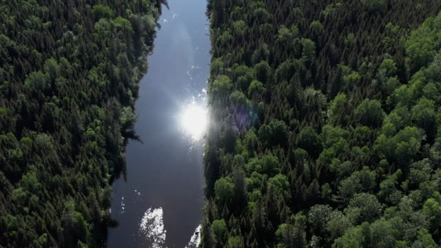 aerial view of boreal nature forest and river in summer - tree hugging stock videos & royalty-free footage