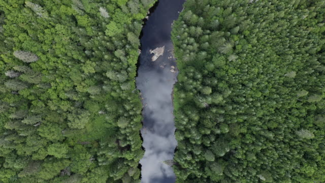 aerial view of boreal nature forest and river in summer - moving up stock videos & royalty-free footage
