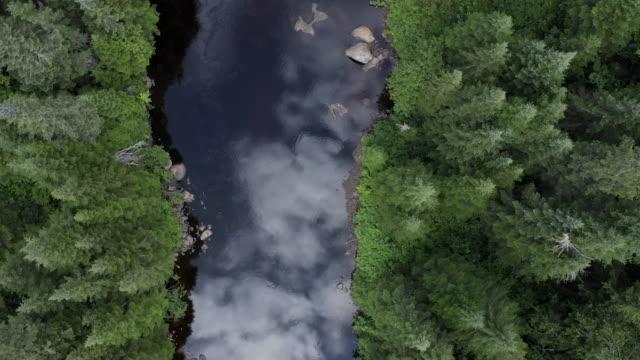 夏のボリアル自然林と川の空中写真 - 寒帯林点の映像素材/bロール