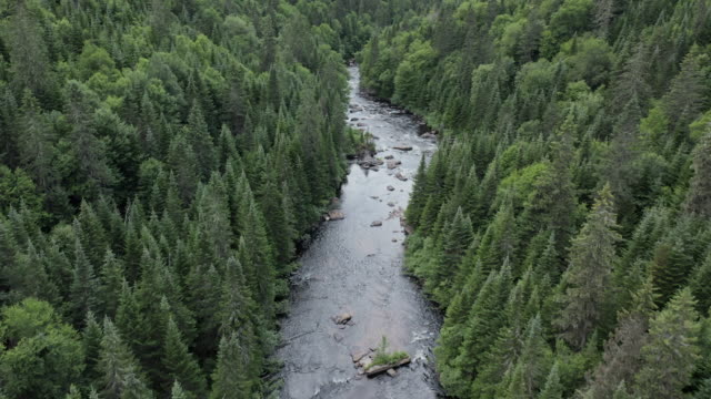 aerial view of boreal nature forest and river in summer - forestry industry stock videos & royalty-free footage