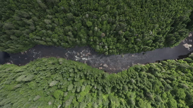aerial view of boreal nature forest and river in summer - rapid stock videos & royalty-free footage