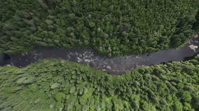stockvideo's en b-roll-footage met luchtfoto van het boreale natuur bos en de rivier in de zomer - stroomversnelling