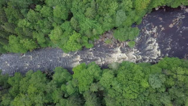 vídeos y material grabado en eventos de stock de vista aérea del bosque boreal de la naturaleza y el río en verano - toma aérea en vuelo