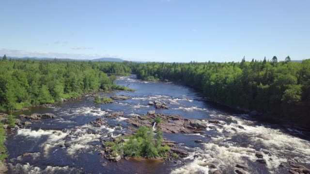 aerial view of boreal nature forest and river in summer - air to air shot stock videos and b-roll footage