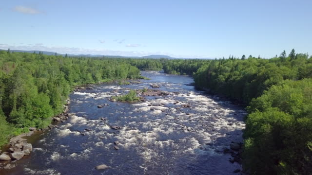 aerial view of boreal nature forest and river in summer - air to air shot stock videos & royalty-free footage