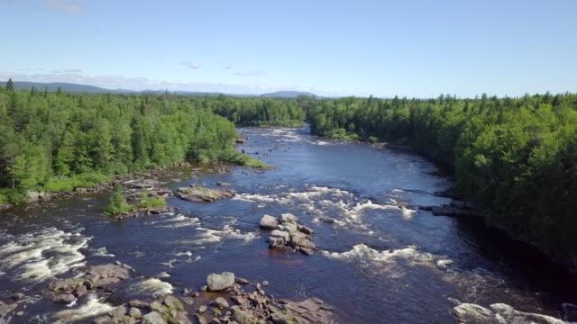 自然林と夏の川の航空写真 - 木を抱く点の映像素材/bロール