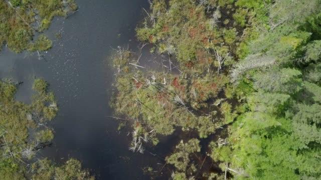 stockvideo's en b-roll-footage met luchtfoto van de boreale bossen van de natuur en rivier in de zomer - broek