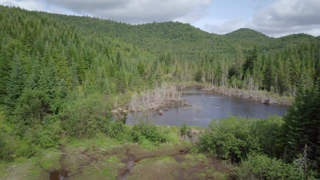 aerial view of boreal nature forest and river in summer - beaver dam stock videos and b-roll footage