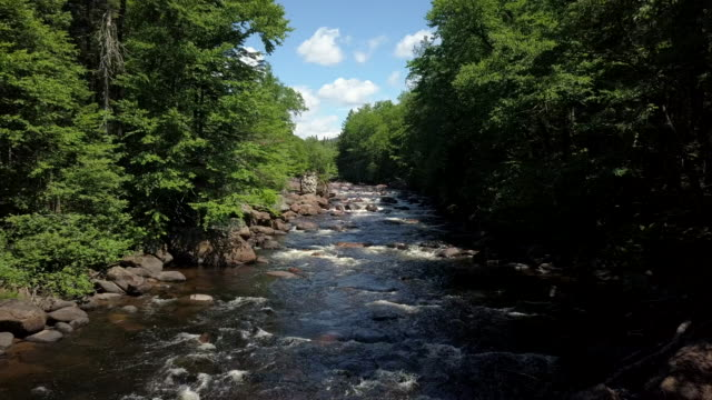 vídeos y material grabado en eventos de stock de vista aérea del bosque boreal de la naturaleza y el río en verano - protección de fauna salvaje