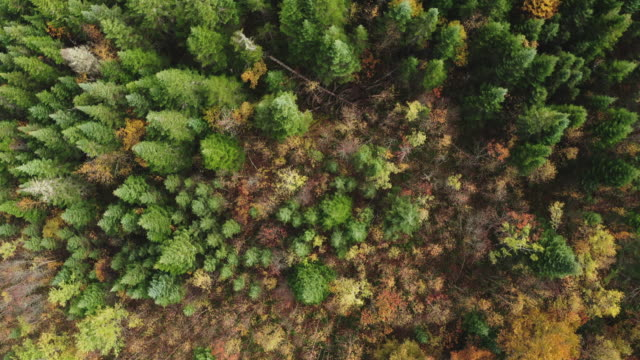 aerial view of boreal nature forest in autumn - hugging tree stock videos & royalty-free footage
