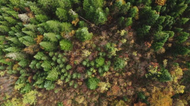 vídeos y material grabado en eventos de stock de vista aérea del bosque boreal de la naturaleza en otoño - multicóptero