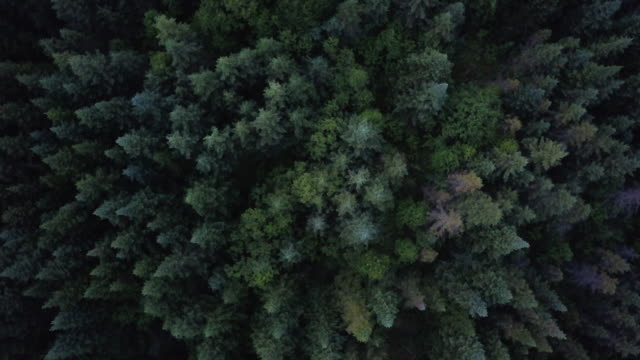 aerial view of boreal nature forest in summer - air to air shot stock videos & royalty-free footage