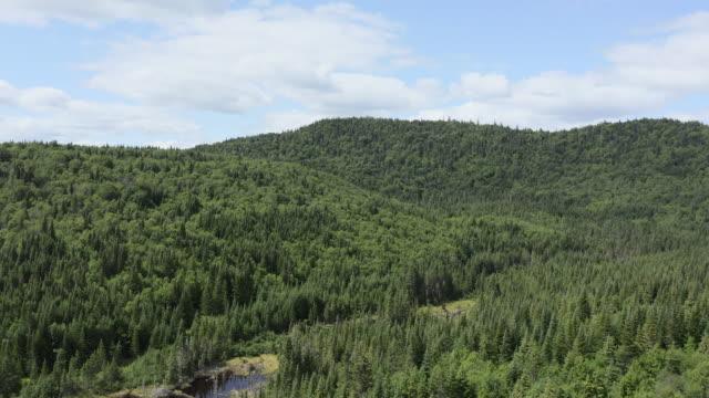 vídeos y material grabado en eventos de stock de vista aérea del bosque natural boreal en verano - protección de fauna salvaje