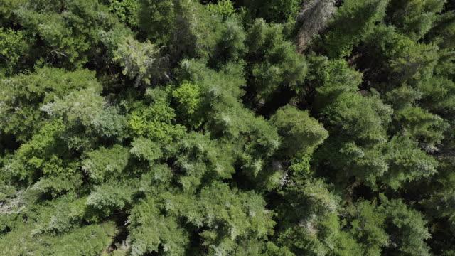 stockvideo's en b-roll-footage met luchtfoto van het boreale natuur bos in de zomer - onbemand luchtvaartuig