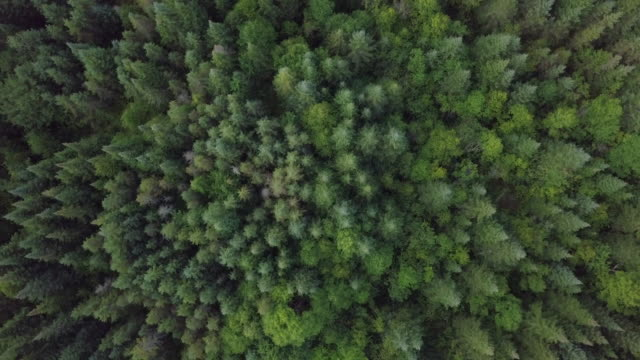 aerial view of boreal nature forest in summer - copertura di alberi video stock e b–roll