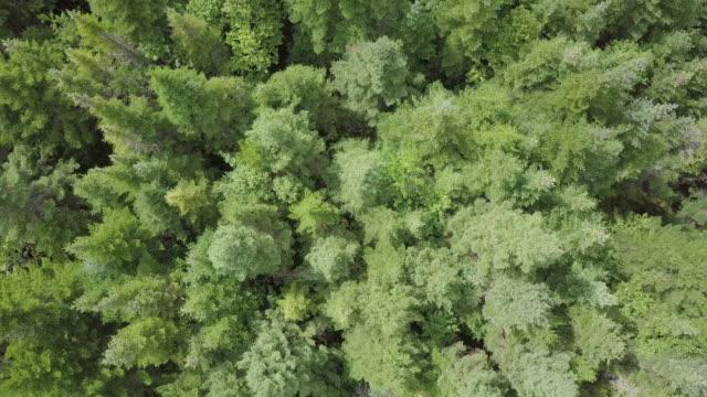 Luftaufnahme des borealen Natur Wald im Sommer