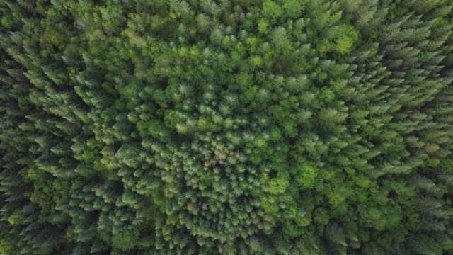 aerial view of boreal nature forest in summer - boreal forest stock videos & royalty-free footage