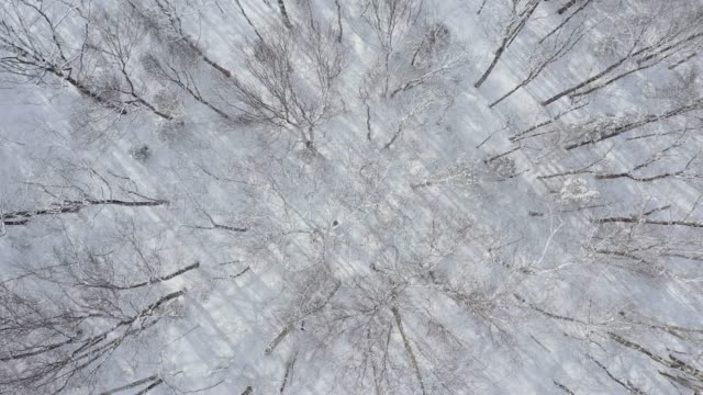 aerial view of boreal nature forest in winter after snowstorm, quebec, canada - quebec stock videos & royalty-free footage
