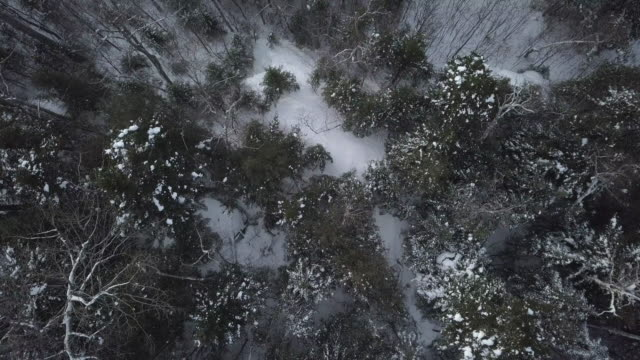 aerial view of boreal nature forest in winter - frost stock videos & royalty-free footage