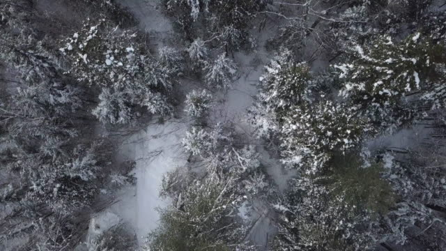 aerial view of boreal nature forest in winter - quebec stock videos and b-roll footage