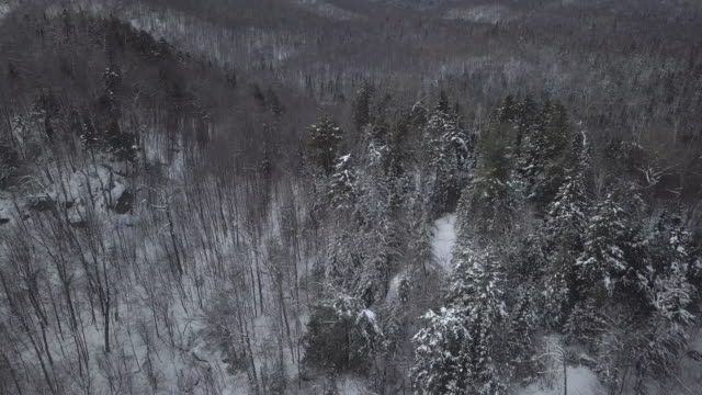 Aerial View of Boreal Nature Forest in Winter