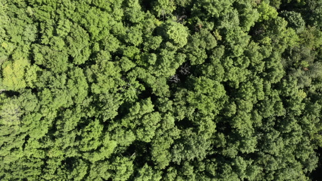 aerial view of boreal nature forest view from the sky in summer - air vehicle stock videos & royalty-free footage