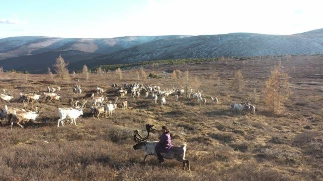 モンゴルの群れを襲うトナカイの少年の空中写真 - 家畜を集める点の映像素材/bロール