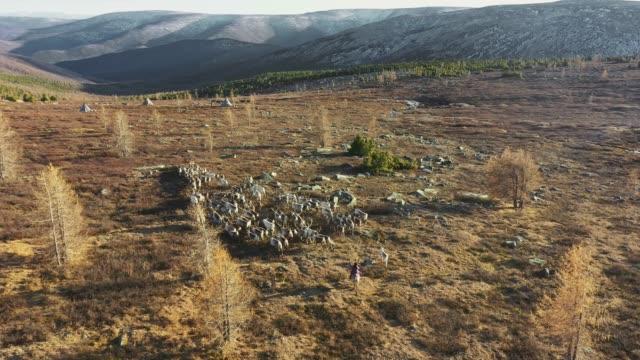 vídeos de stock, filmes e b-roll de vista aérea do menino sobre rebanho de renas na mongólia - animal de trabalho