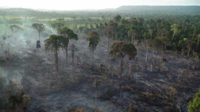 aerial view of burned ground in the amazon rainforest after devastating fires - rainforest stock videos & royalty-free footage