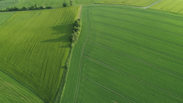 aerial view of bushes between green agricultural fields. saale-orla-kreis, thuringia, germany, europe. - turingia video stock e b–roll