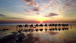 Aerial view of camels on Cable Beach in Broome Australia