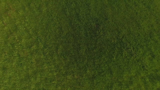 Aerial view of cattle on field