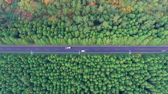 aerial view of cedar trees and bijarim-ro street in jeju-do island - evergreen stock videos and b-roll footage