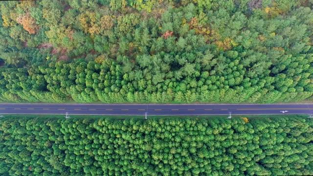 vídeos y material grabado en eventos de stock de aerial view of cedar trees and bijarim-ro street in jeju-do island - carretera vacía