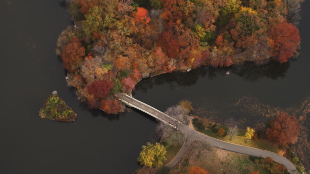 aerial view of central park in autumn foliage. shot in 2011. - artbeats 個影片檔及 b 捲影像