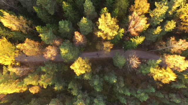Aerial view of Central Park in autumn - Helsinki, Finland.
