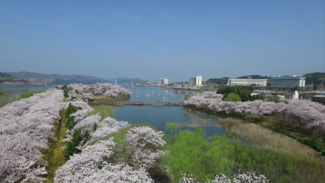 Aerial view of Cherry Blossom Festival in Gyeongju
