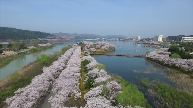 Aerial view of Cherry Blossom Street and lake